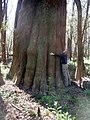 Tree Huggin' at Congaree! (8971535094).jpg
