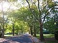 Treelined Street at Sunrise - panoramio.jpg