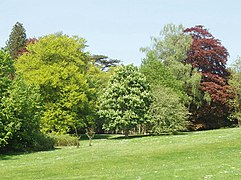 Trees at Blenheim with spring foliage - geograph.org.uk - 796790.jpg