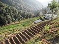 Turner Organic Farm (5273790857).jpg