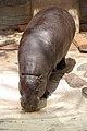 Ueno zoo, Tokyo, Japan (2389764112).jpg