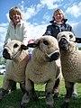 Uffculme - Uffculme Show 2010 & Prize Winning Sheep (geograph 1839025).jpg