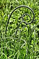 Umarmung zweier Gräser.jpg