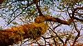 Under The Tree (140292791).jpeg