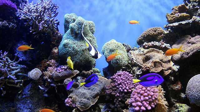 Morské spoločenstvo