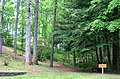 University of Tennessee Arboretum - path.JPG