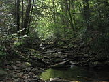 Upper Pine Bottom State Park Run 1.jpg