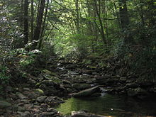 A small stream flows over smooth rocks through lush green vegetation. Sunlight reflects off some leaves while other places are in deep shade.