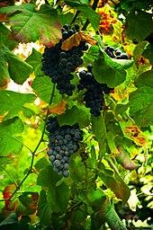 Verde Valley Wine Trail Tours
