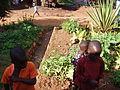 Vegetable garden next to UDDT in Mulago, Kampala (4331540627).jpg