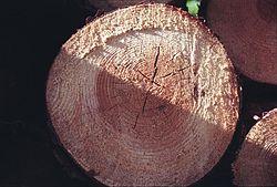 кое дърво има твърда дървесина Дървесина – Уикипедия кое дърво има твърда дървесина