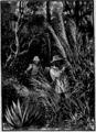 Verne - Le Superbe Orénoque, Hetzel, 1898, Ill. page 347.png