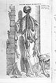 "Vesalius, ""De humani..."", plate of muscles Wellcome L0029564.jpg"