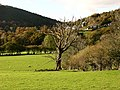 View across valley from A470 - geograph.org.uk - 601193.jpg