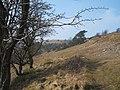 View on side of Longstone Edge - geograph.org.uk - 1210840.jpg