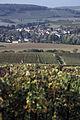Vigne Pinot Noir (Festigny) Cl.vrt J.WeberJPG (23382051500).jpg