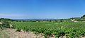 Vignobles de Rasteau.jpg