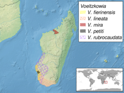 Voeltzkowia sp. distribution.png