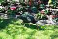 Vogelpark Walsrode - Geronticus eremita 01 ies.jpg