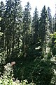 Wald, Feldbergerhof - geo.hlipp.de - 32319.jpg