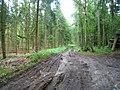 Waldweg - Holmer Wald - geo.hlipp.de - 35655.jpg