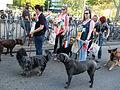 Wandelende vrouwen met honden Spijkenisse.jpg