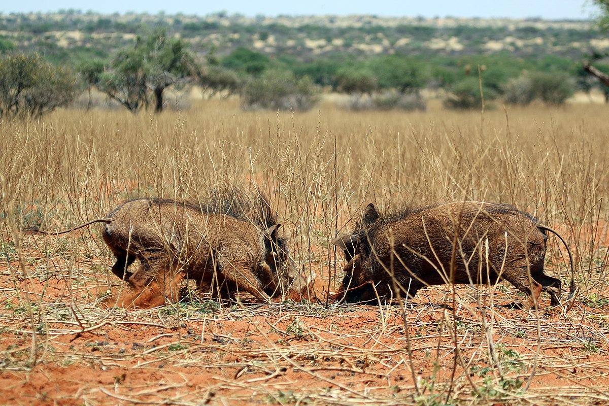 Tswalu Kalahari Reserve Wikipedia