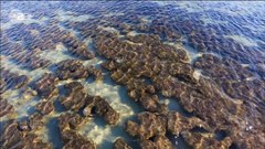 File: What is a Stromatolite (CC BY 4.0) (720p) .webm