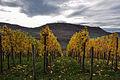 Wein von der Limburg!.jpg