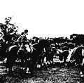Werner Haberkorn - Prática de equitação 7.jpg