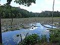 Wetlands of Calvert Cliffs State Park 03.jpg