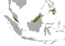White-collared Fruit Bat area.png