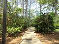 Whitehead Camellia Trail 3.JPG