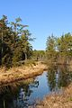 Whitesbog NJ Pine Barrens.jpg