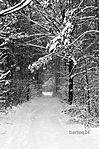 Winter road (16805434815).jpg