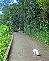 Woman walking dogs down Old Peak Road, Hong Kong.jpg