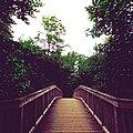 Wooden bridge in Alstertal.jpg