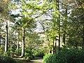 Woodland at Cae Canol - geograph.org.uk - 275061.jpg