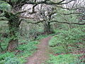 Woodland path west of Sutton - geograph.org.uk - 1246359.jpg