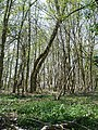 Woodland west of Broad Street Hill - geograph.org.uk - 161791.jpg
