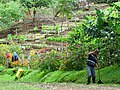 Worker with Flower Garden - Finca Esperanza Verde - Near Matagalpa - Nicaragua (31275758580).jpg