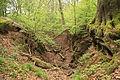 Wuppertal - Zu den Dolinen - Dolinengelände 14 ies.jpg