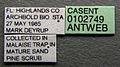 Xenomyrmex floridanus casent0102749 label 1.jpg