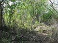 Xtobó, Yucatán (13).jpg
