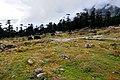 Yaks grazing.jpg