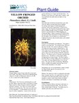 Yellow fringed orchid Plant guide.pdf