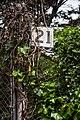 Yerba Buena Island - Wichary (16267084591).jpg