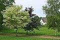 Young trees Manor Farm Pentridge - geograph.org.uk - 304538.jpg