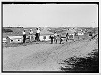 Zdai Warburg. Colony (Fields or gardens of Warburg). Warburg Colony. General view of colony six months old. LOC matpc.04068.jpg