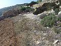 Zurrieq, Malta - panoramio (102).jpg